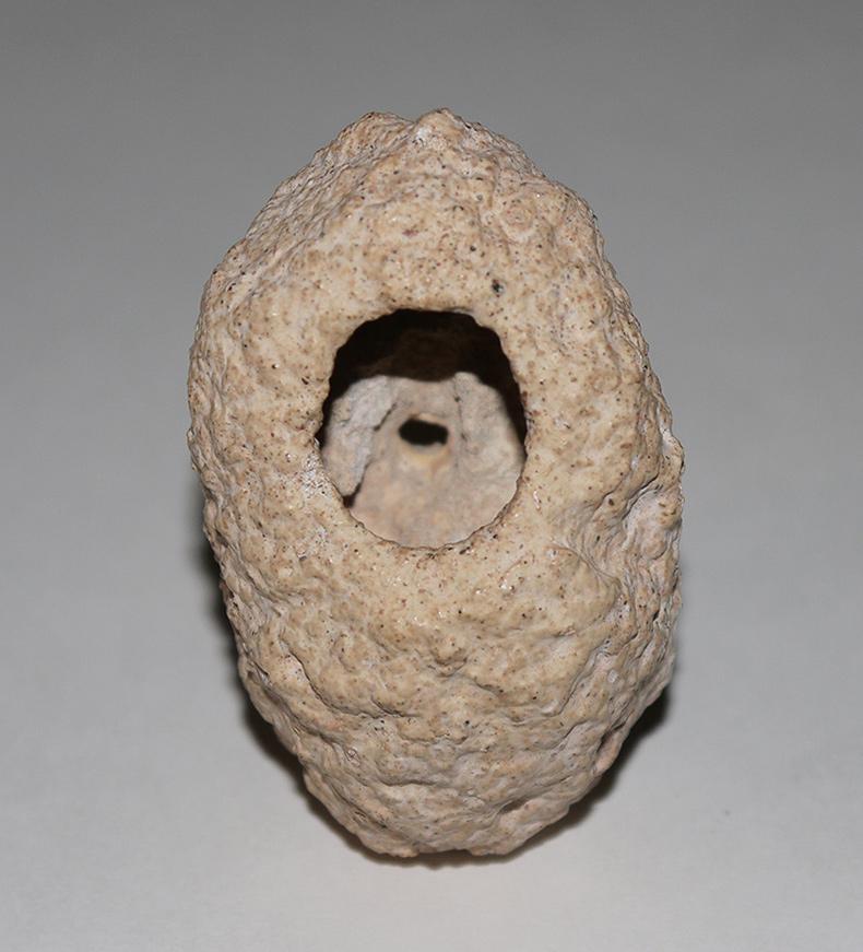 Weevil Cocoon